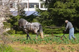 aratro trainato dal cavallo